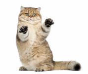 Корм для взрослых кошек