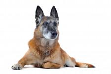 Корм для пожилых собак