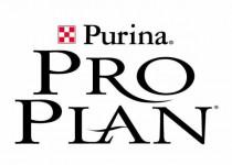 Сухой корм для котят PRO PLAN (Про План)